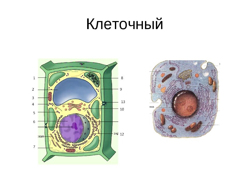Клеточный