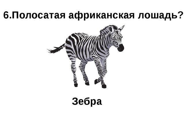 6.Полосатая африканская лошадь? Зебра