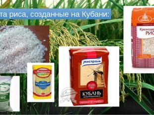 Сорта риса, созданные на Кубани: