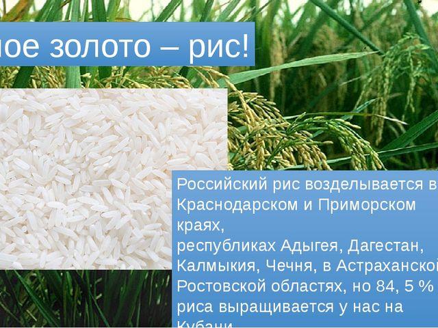Белое золото – рис! Российский рис возделывается в Краснодарском и Приморском...