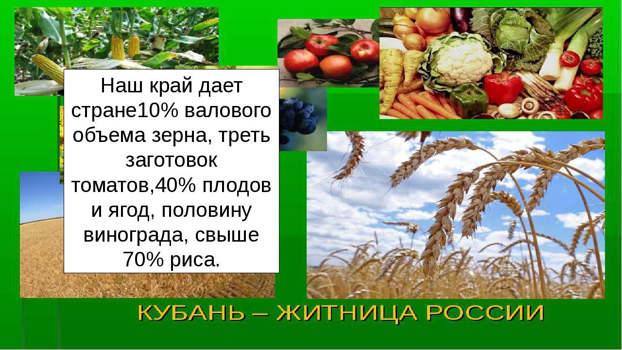 Наш край дает стране10% валового объема зерна, треть заготовок томатов,40% пл...