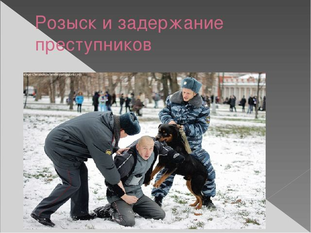Розыск и задержание преступников