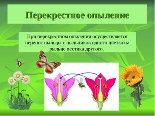Перекрестное опыление При перекрестном опылении осуществляется перенос пыльцы