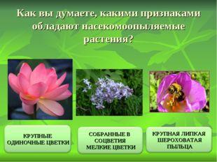 Как вы думаете, какими признаками обладают насекомоопыляемые растения?