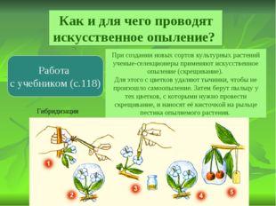 Как и для чего проводят искусственное опыление? Работа с учебником (с.118) Пр