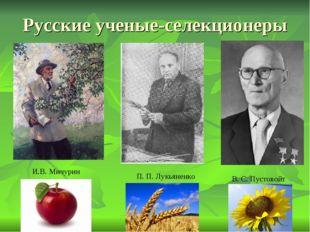 Русские ученые-селекционеры И.В. Мичурин П. П. Лукьяненко В. С. Пустовойт