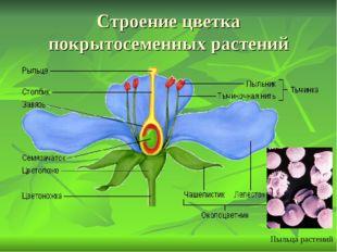 Строение цветка покрытосеменных растений Пыльца растений