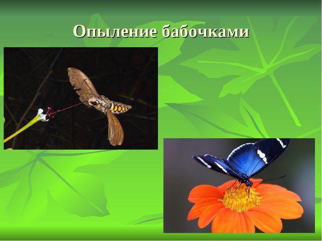 Опыление бабочками