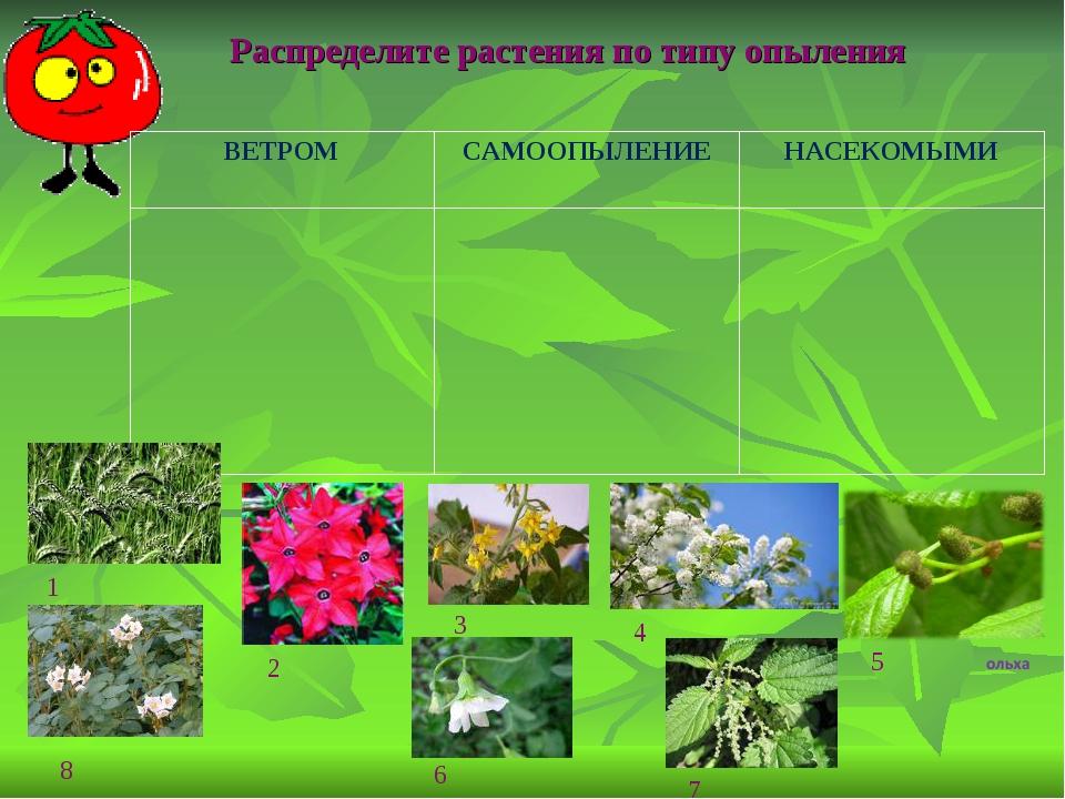 Распределите растения по типу опыления 1 2 3 4 5 8 7 6 ВЕТРОМСАМООПЫЛЕНИЕНА...