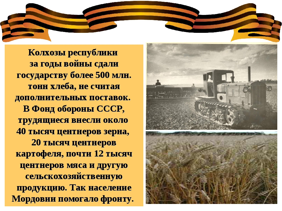 Колхозы республики за годы войны сдали государству более 500 млн. тонн хлеба,...