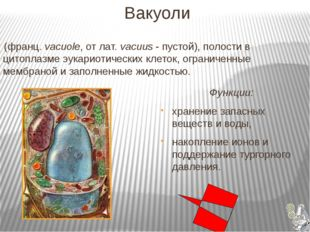 Вакуоли (франц. vacuole, от лат. vacuus - пустой), полости в цитоплазме эука