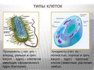 типы клеток