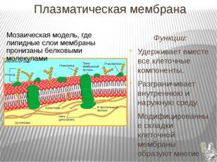 Плазматическая мембрана Функции: Удерживает вместе все клеточные компоненты