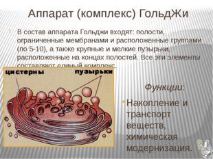 Аппарат (комплекс) ГольдЖи  Функции: Накопление и транспорт веществ, химич