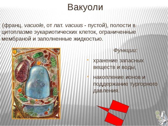 Вакуоли (франц. vacuole, от лат. vacuus - пустой), полости в цитоплазме эука...