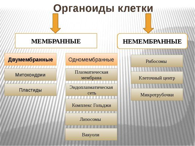 Органоиды клетки  МЕМБРАННЫЕ