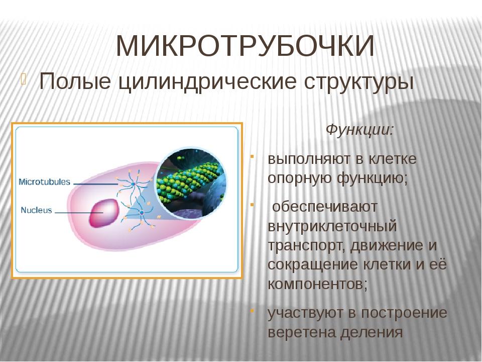 МИКРОТРУБОЧКИ  Полые цилиндрические структуры