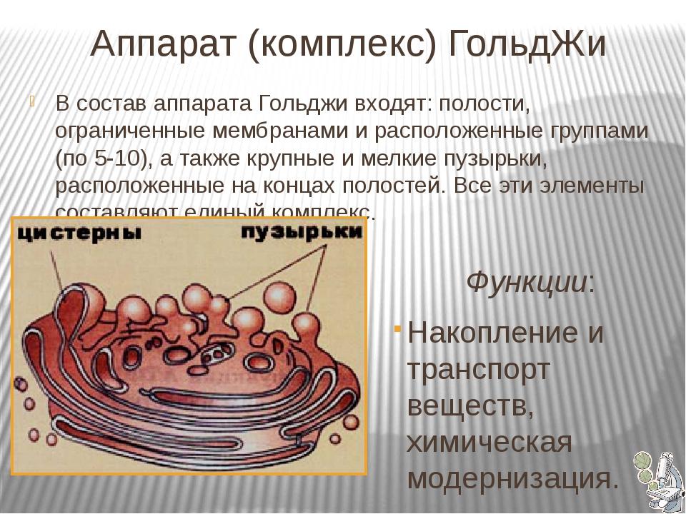 Аппарат (комплекс) ГольдЖи  Функции: Накопление и транспорт веществ, химич...