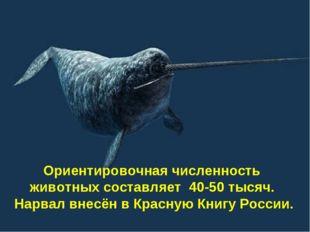 Ориентировочная численность животных составляет 40-50 тысяч. Нарвал внесён в