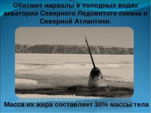 Обитают нарвалы в холодных водах акватории Северного Ледовитого океана и Севе