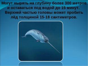 Могут нырять на глубину более 300 метров и оставаться под водой до 15 минут.