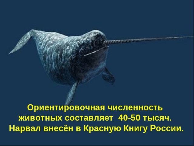Ориентировочная численность животных составляет 40-50 тысяч. Нарвал внесён в...