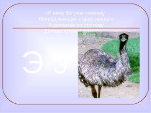 «Я вижу бегунов команду. Вперёд выходит страус нанду!» А репортаж на эту тему