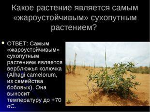 Какое растение является самым «жароустойчивым» сухопутным растением? ОТВЕТ: С