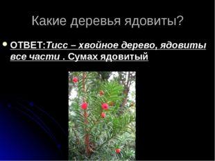 Какие деревья ядовиты? ОТВЕТ:Тисс – хвойное дерево, ядовиты все части . Сумах