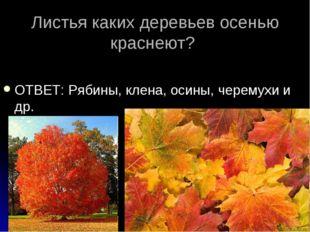 Листья каких деревьев осенью краснеют? ОТВЕТ: Рябины, клена, осины, черемухи