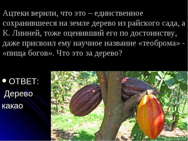 Ацтеки верили, что это – единственное сохранившееся на земле дерево из райско...
