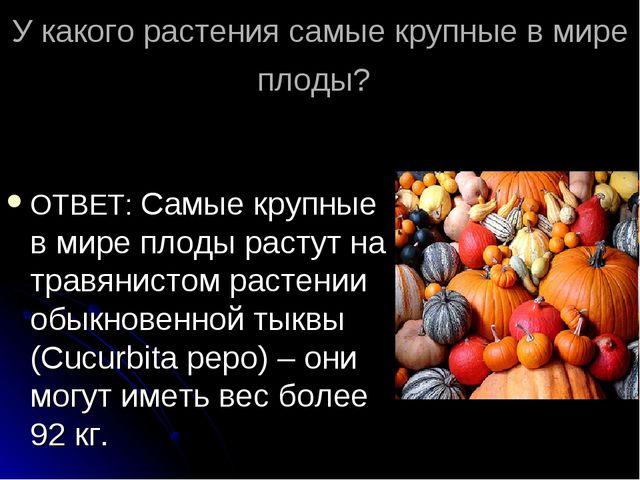 У какого растения самые крупные в мире плоды? ОТВЕТ: Самые крупные в мире пло...