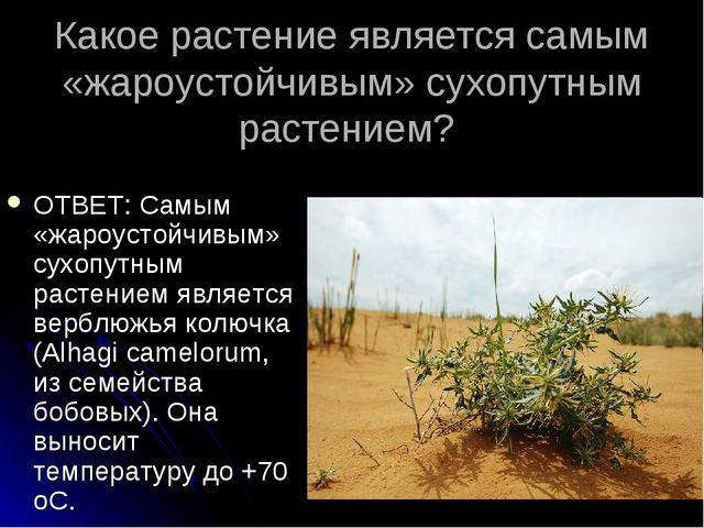 Какое растение является самым «жароустойчивым» сухопутным растением? ОТВЕТ: С...
