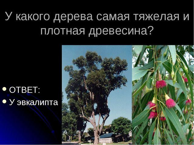 У какого дерева самая тяжелая и плотная древесина? ОТВЕТ: У эвкалипта
