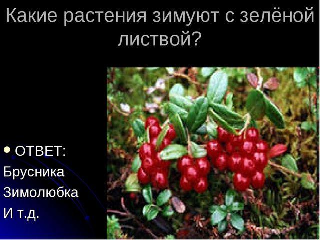 Какие растения зимуют с зелёной листвой? ОТВЕТ: Брусника Зимолюбка И т.д.