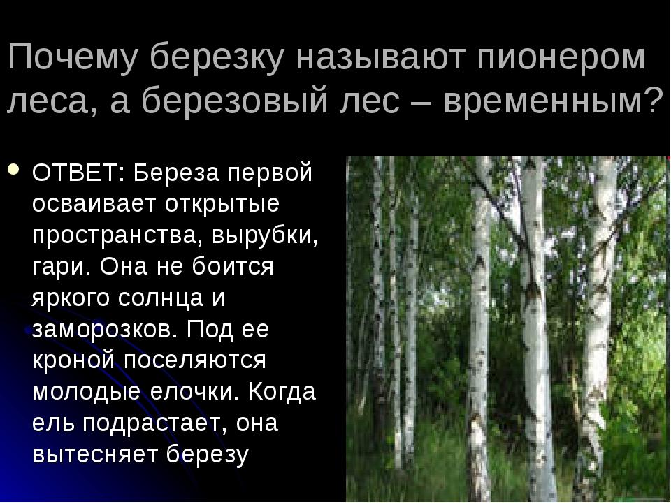 Почему березку называют пионером леса, а березовый лес – временным? ОТВЕТ: Бе...
