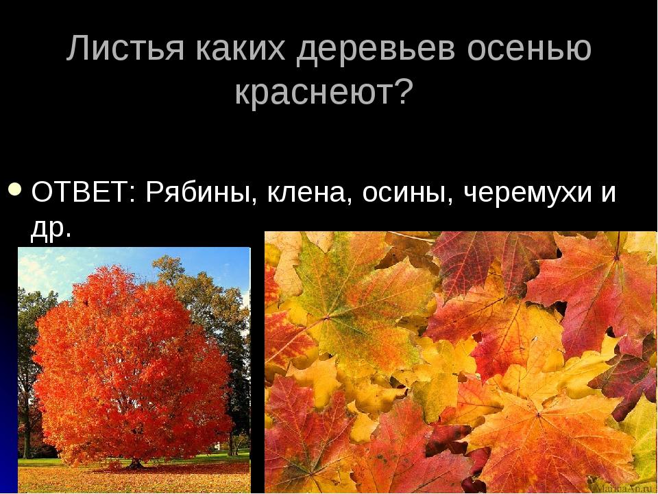 Листья каких деревьев осенью краснеют? ОТВЕТ: Рябины, клена, осины, черемухи...