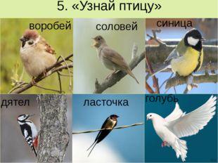 5. «Узнай птицу» воробей соловей синица дятел ласточка голубь