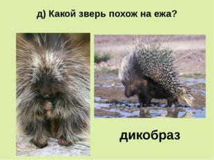 д) Какой зверь похож на ежа? дикобраз