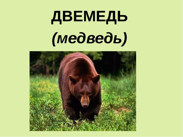 ДВЕМЕДЬ (медведь)