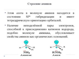 Строение аминов Атом азота в молекуле аминов находится в состоянии SP³ гибрид