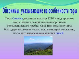 Гора Синюха достигает высоты 1210 м над уровнем моря, являясь самой высокой в