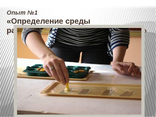 Опыт №1 «Определение среды распространенных пищевых блюд»