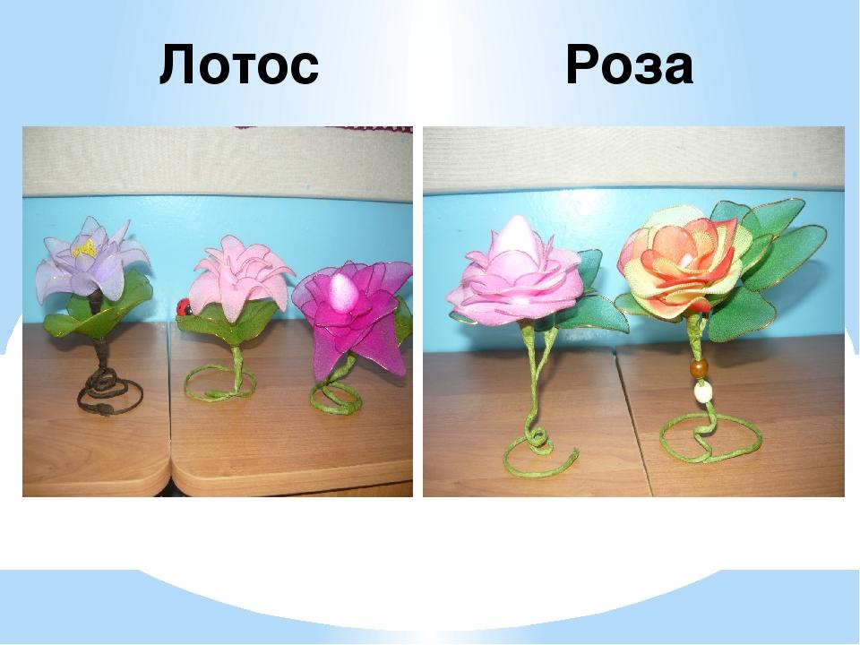 Лотос Роза