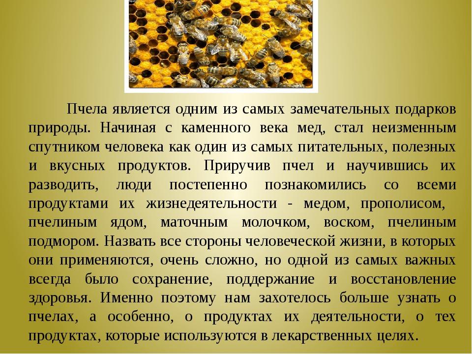 Пчела является одним из самых замечательных подарков природы. Начиная с каме...