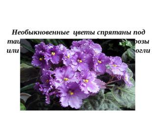 Необыкновенные цветы спрятаны под таинственным пологом, едва ли это розы или