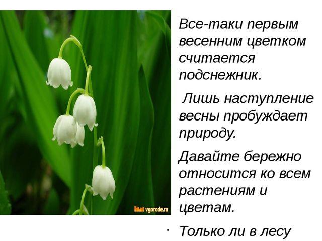 Все-таки первым весенним цветком считается подснежник. Лишь наступление весн...