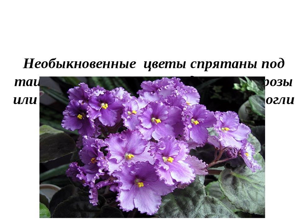 Необыкновенные цветы спрятаны под таинственным пологом, едва ли это розы или...