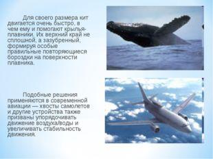 Для своего размера кит двигается очень быстро, в чем ему и помогают крылья-п