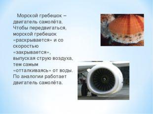 Морской гребешок – двигатель самолёта. Чтобы передвигаться, морской гребешок